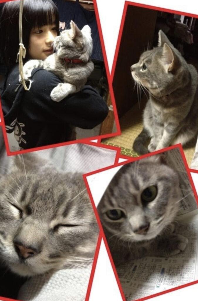 芳根京子さんのペットのネコのミル